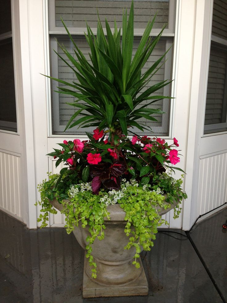 46 best summer planting images on pinterest gardening for Yard planter ideas