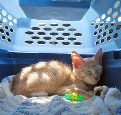 Moving Cats to Hawaii & Quarantine Processing