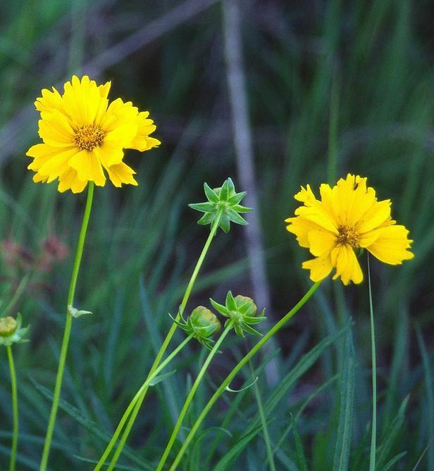 Wildflower Gardening : HGTV