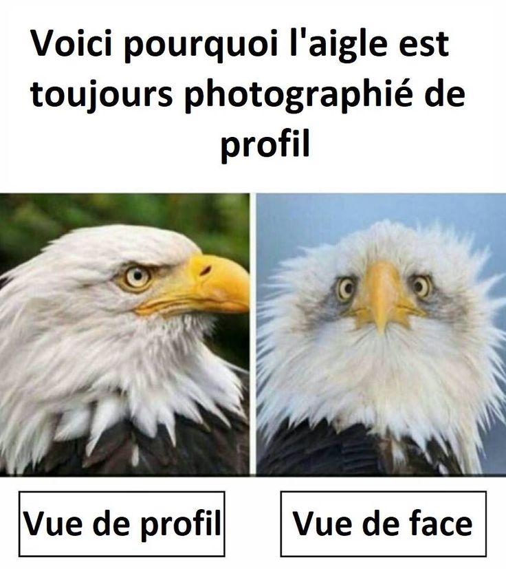 Voici pourquoi l'aigle est toujours photographié de profil ^^ !!! #aigle #aigles #rapace #rapaces #oiseau #oiseaux #humour #humours #blague #blagues #gag