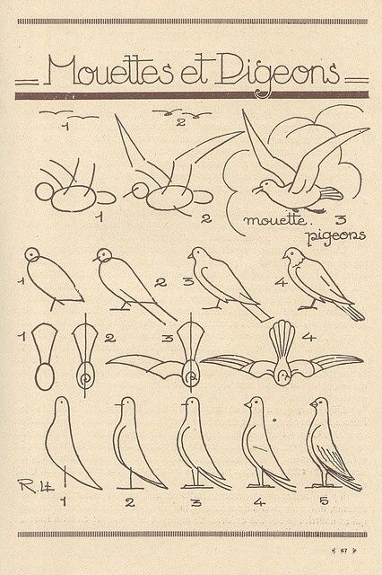How to drawing easy birds
