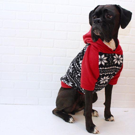 Big Dog Wearing Sweater Large Dog Chris...