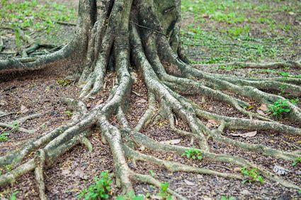 Stevig staan met je wortels diep in de aarde