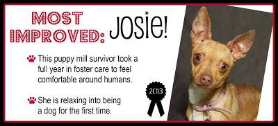 TAGS Awards: Part 1 - Most Improved: Josie!