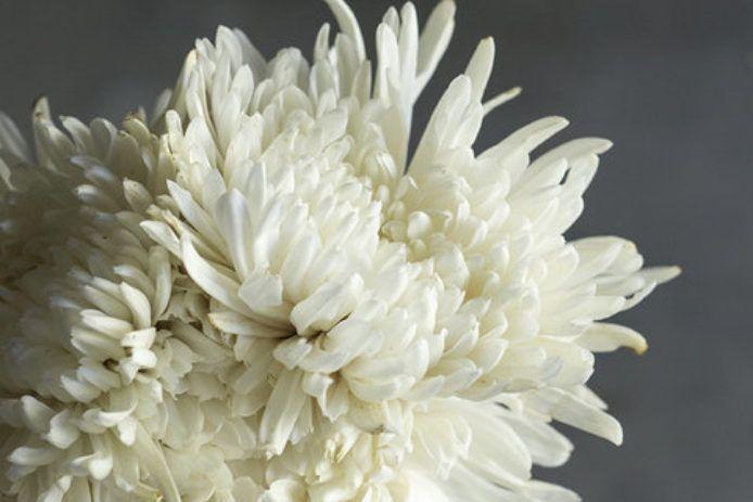 Chrysanthemum Elegant Symbolic Flowers For Autumn Bouquets Sunset Chrysanthemum Flowers Fall Bouquets