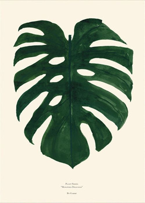Plants - Monstera | Just Spotted