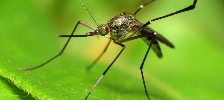 the zika virus symptoms, Zika virus, zika virus birth defects, zika virus caribbean, zika virus origin, zika virus pregnancy, zika virus symptomen