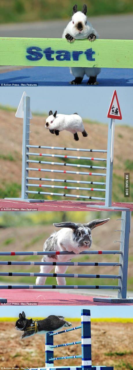 High Jump Rabbits!