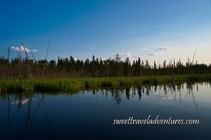 Beaver Canals in Reeds on the Hanging Heart Lakes in Prince Albert National Park, Saskatchewan, Canada