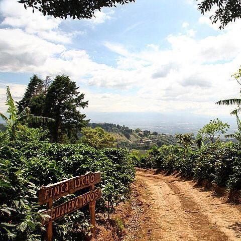 Costa Rica Finca de Licho Yellow Honey Villa Sarchi