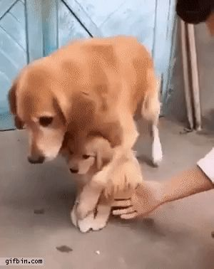 11 Absolutely Cute and Funny Dog Gifs That Will Have You Laughing All Day #funnydogs #cutedogs