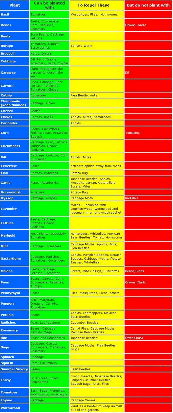 sample companion planting chart
