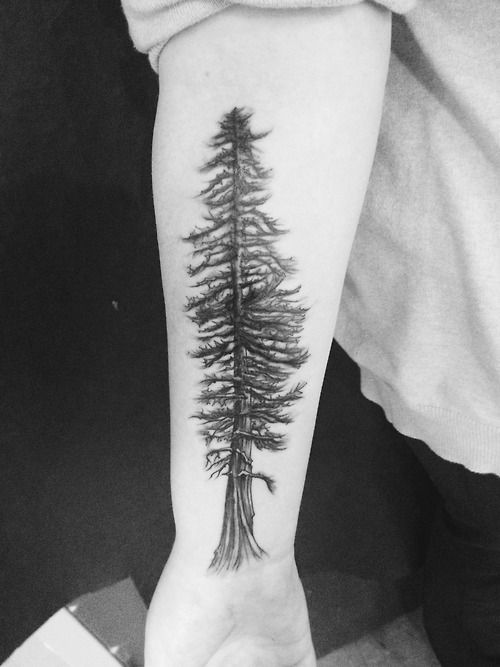 my redwood i got to symbolize getting over my depression done by ariel at twilight tattoo in. Black Bedroom Furniture Sets. Home Design Ideas