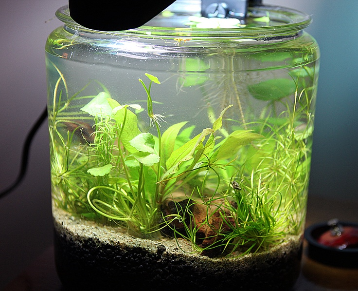 24 best images about planted tanks on pinterest dutch for 3 gallon fish tank for betta