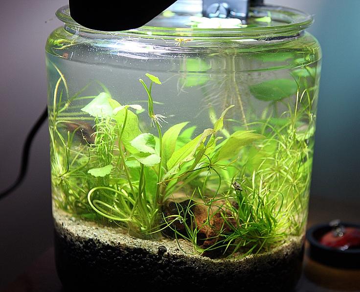 65 Best Images About Goldfish Amp Betta Bowls On Pinterest