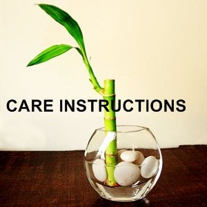 lucky bamboo plant care instructions - didn't know half of this.