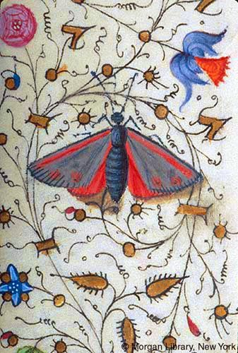Butterfly | Book of Hours | France, Provence | ca. 1440-1450 | The Morgan Library & Musuem