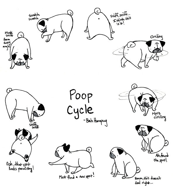 Bah Humpug: Pug Poop Cycle