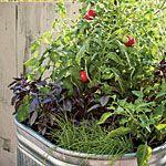 One pot vegetable garden -- maybe next year: Gardens Ideas, Container Gardens, Gardens Tomatoes, One Pots Vegetable, Vegetables Gardens, Gardening, Veggies Gardens, Vegetable Gardens,  Flowerpot