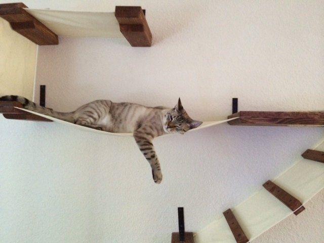 人をダメにするソファよりも、ダメ時空に引きこむ力は強そうです。 Etsyの「CatastrophiCreations」にて絶賛販売中の「Cat bridge.. indiana jones cat bridge」。壁に取り付けるボードと、吊り橋のセットです。商品名にあるとおり、『インディ・ジョーンズ/魔宮の伝説』の、あの吊り橋であります。