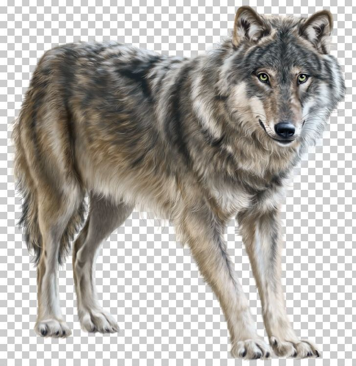 Mongolian Wolf Eurasian Wolf Png Animals Canis Lupus Tundrarum Computer Icons Coyote Czechoslovakian Wolfdog Eurasian Wolf Wolf Clipart Wolf