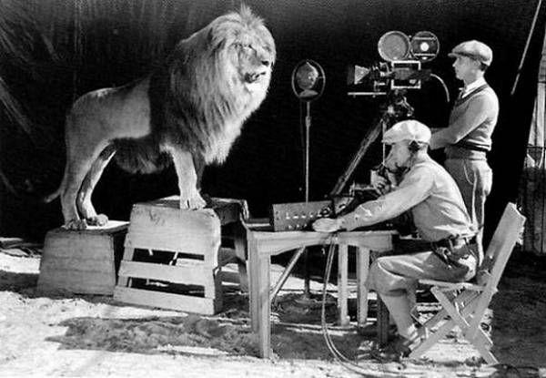 Un camarógrafo grabando al león rugiente para el logo de MGM
