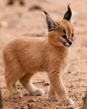 don't know what kind of animal this is exactly but its super cool and cute