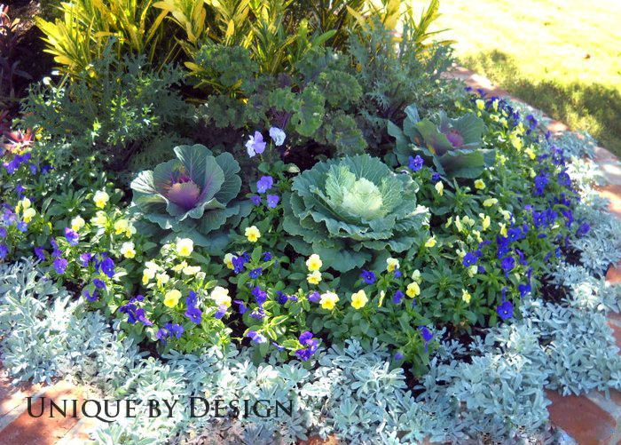 Peacock Kale Ornamental Cabbage Croton And Viola With A