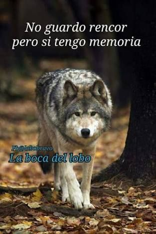 Resultado de imagen para lobos con frases