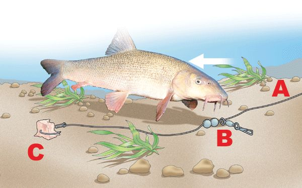 99 best Course fishing images on Pinterest