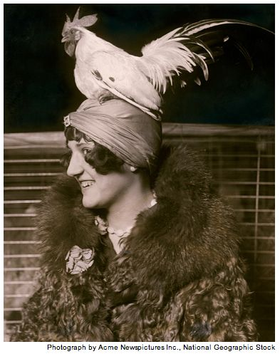 Feathers in Her Cap: Mae Vavrea with a black-tailed white Japanese bantam rooseter atht the Chicago Poultry and Pet Show in 1929. Fro the Flasback Archives of the ngm.com . #Photography #National_Geographic #Mae_Vavrea
