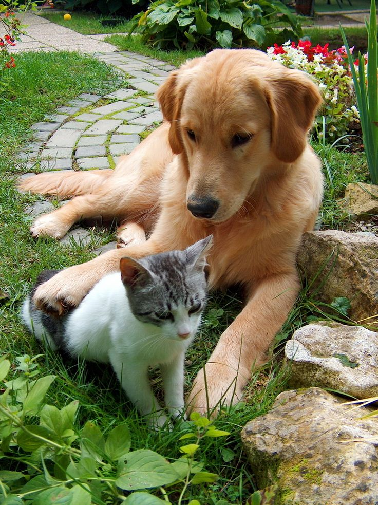 Do Cats Give Kisses Like Dogs