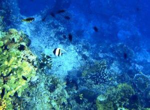 Diving Sites in Bunaken, Manado, Indonesia