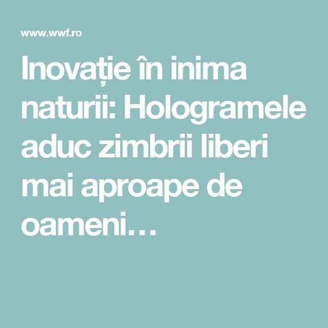 Inovație în inima naturii: Hologramele aduc zimbrii liberi mai aproape de oameni…