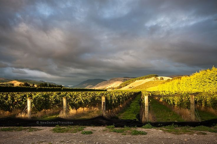 dramatic sky above Martinborough vineyard