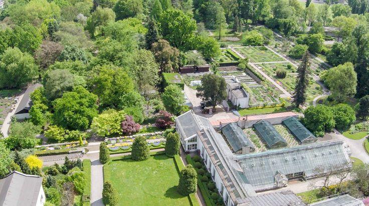 Ogród botaniczny z lotu ptaka [ZDJĘCIA Z DRONA] - Zdjęcie 57334 - LoveKraków.pl