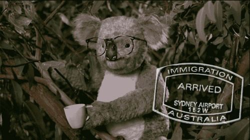 Want to drink tea like a Koala? Read our report on how to get a Working Holiday Visa in Australia. @Yungdumbandfun