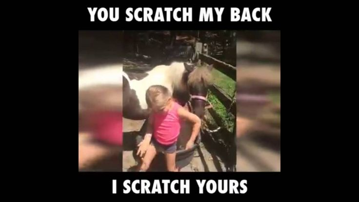 very funny kid and horse,very funny video of a kid and horse scratching ...