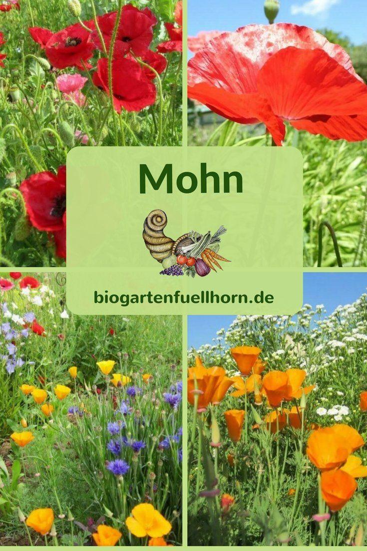 Einjahriger Mohn Im Biogarten Fullhorn Biogarten Fullhorn Biogarten Pflanzen Garten Bepflanzen