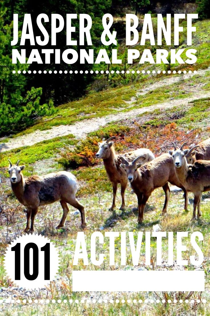 What to do when visiting Canada's Jasper and Banff National Park. 101 activities for all ages and interests.