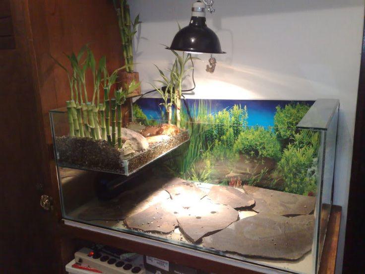 m s de 25 ideas incre bles sobre peceras para tortugas en