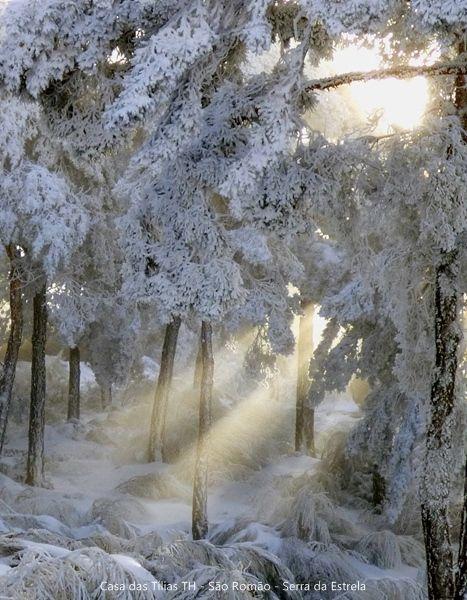 Floresta do Vale do Rossim na Serra da Estrela