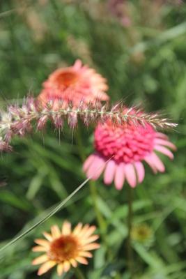 Notes From The Garden - MacKenzie Childs,