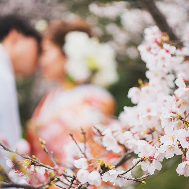 【kaaana.n】さんのInstagramをピンしています。 《和装後撮り** #kana_jp_photo . 和装後撮りは桜の時期でした . 夫が新しい髪型にご満悦✨笑. 男性も髪型ひとつでテンション上がるんですね✨ . 『亭主改造計画‼︎』みたいに、彼や旦那さんのヘアアレンジや髪型のお悩み解決したり、タキシードコーデ何着たらいいかわからないけどおしゃれになりたいおしゃれになって欲しいとかあったらアドバイスしあったり…. マナー講座講師さんに結婚式当日の挨拶や、両親の顔合わせなどの時に男として役立つマナーを習ったり…カップル参加限定で、かっこよくなった彼や旦那さんとフォトブースで写真撮ったり♡なーんていう花婿会なんて需要あるかな⁇笑 . と、唐突に妄想 . . #和装#和装前撮り#前撮り#後撮り#桜#色打掛#和装ヘア#ウェディングフォト#ロケーションフォト#プレ花嫁#卒花#卒花嫁#farnyレポ#alolea#marryxoxo#muse5cco#ウェディングソムリエアンバサダー#東海花嫁#東海プレ花嫁#日本中のプレ花嫁さんと繋がりたい》