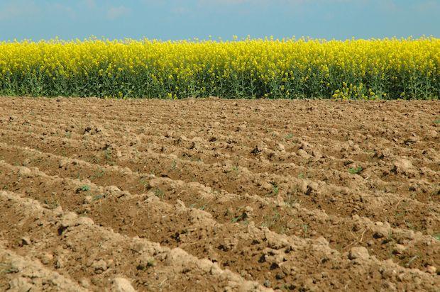 なぜ中国とロシアは「遺伝子組み換え食品を追放」したのか? 地産地消を賞賛するワケ