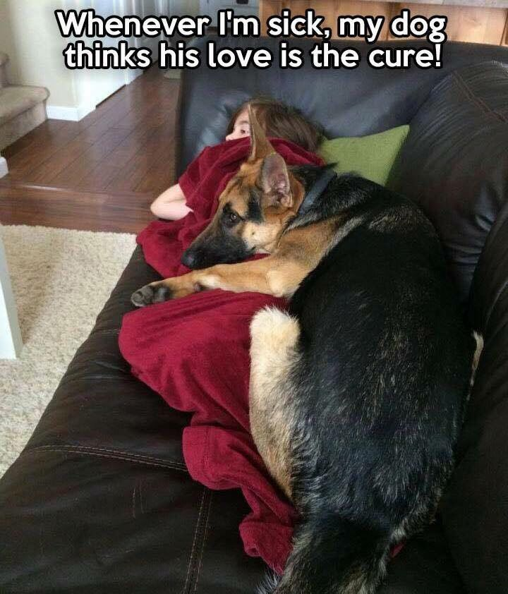 The German Shepherd--of course she's not totally wrong. | See more fun videos here: http://gwyl.io/