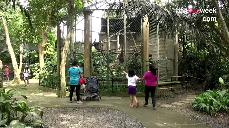 Bali Zoo (Official BTW Video)