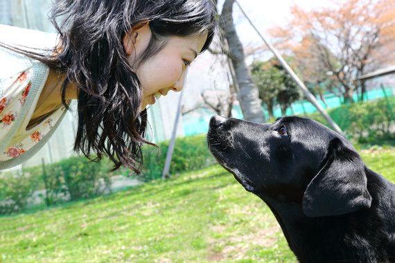 La mirada entre perro y dueño refuerza su unión emocional / Noticias / SINC