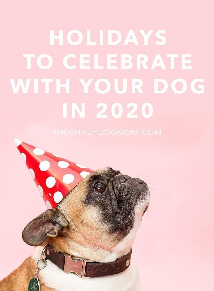 Holidays To Celebrate With Your Dog In 2020 In 2020 National Pet Day Love Your Pet Day Dog Holiday