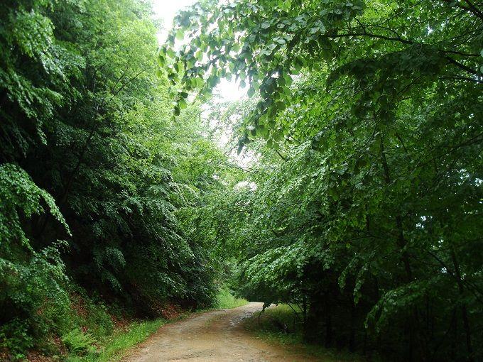 …Στο δάσος της Χαϊντούς Πού; Στους νομούς Ξάνθης και Δράμας, 58 χιλιόμετρα από την Ξάνθη, κοντά στα σύνορα με τη Βουλγαρία -  Αιωνόβιες οξιές που σχεδόν αγγίζουν τον ουρανό, κατακόκκινες σημύδες που κάνουν το τοπίο μαγικά φθινοπωρινό, και φουντωτά έλατα που συμπληρώνουν την πράσινη συμφωνία. Το Παρθένο Δάσος της Χαϊντούς έχει χαρακτηριστεί Διατηρητέο Μνημείο της Φύσης, και υποστηρίζει επάξια τον τίτλο του. Στον πυρήνα του, οι κορμοί των δέντρων αγγίζουν σε διάμετρο τα τρία μέτρα, ενώ όσο…